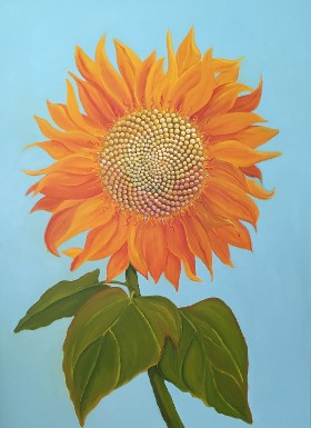 Martha Stewart Sunflower, Celebrity Series