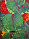 Sea Grape Leaves No. 1, a painting by American Nature Painter, Judith A. Maddox Saylor at JAMS Artworks.