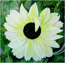Italian Sunflower, a painting by American Nature Painter, Judith A. Maddox Saylor, from the Sunflower Series at JAMS Artworks.