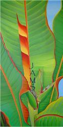 Heliconia No. 2 Painting by American Nature Painter, Judith A. Maddox Saylor.(Bird of Paradise from Fairchild Garden Greenhouse, Miami, Florida)