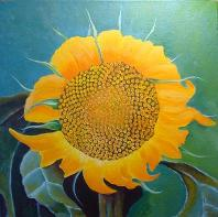 FibSunflower,No.2_JAMSaylor,AmericanNaturePainter