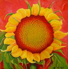 FibSunflower<No.3_AmericanNaturePainter,JAMSaylor